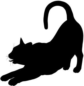 El gato black